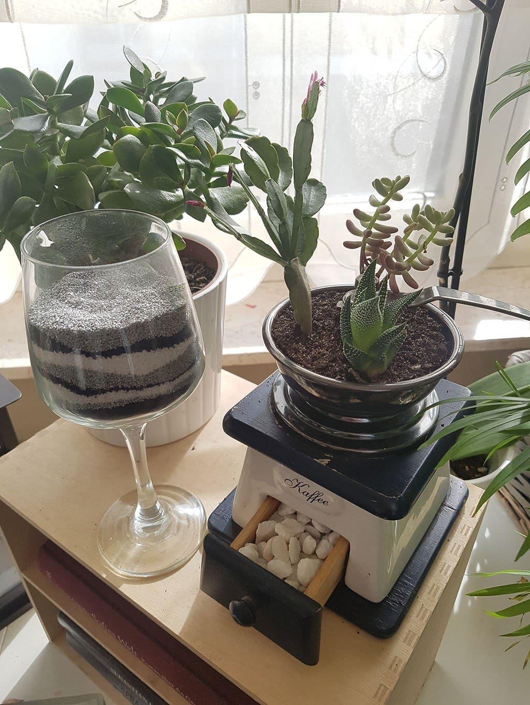 5 Minuten für mehr Ordnung im Haushalt Pflanzen